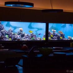 marine aquarium Auckland