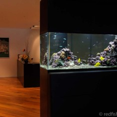 marine aquariums