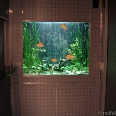nightclub aquarium