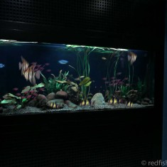 fish tanks Auckland