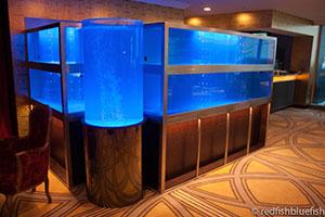 Marine Aquariums Auckland Redfish Bluefish Fish Tanks