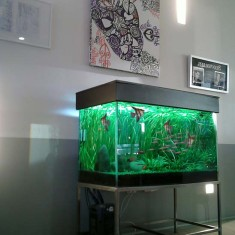 office aquarium fish tanks Auckland