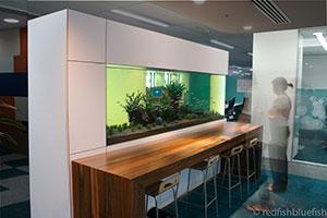 aquarium consulation