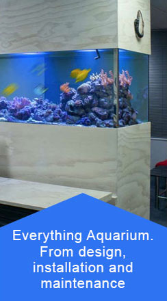aquariums Auckland