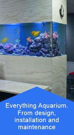 Aquarium designer, Auckland