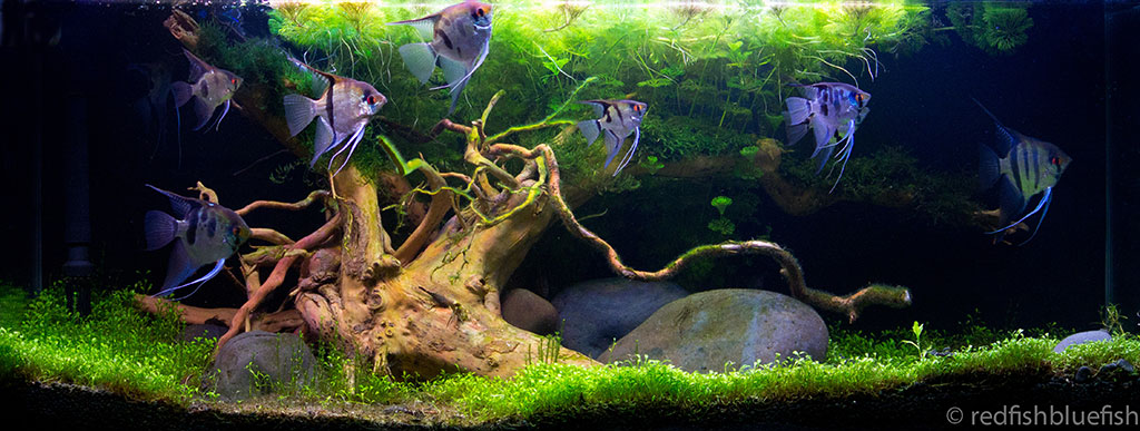 View our aquarium design fish tanks garden ponds for Aquarium fish for pond
