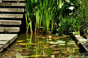 garden pond services