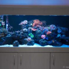 LED lit fish tanks
