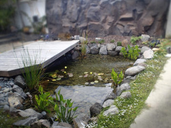 Garden ponds pond design maintenance redfish for Landscape design west auckland
