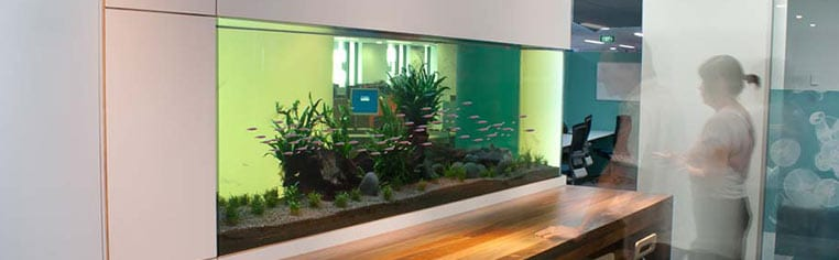 Aquarium Leasing & Servicing