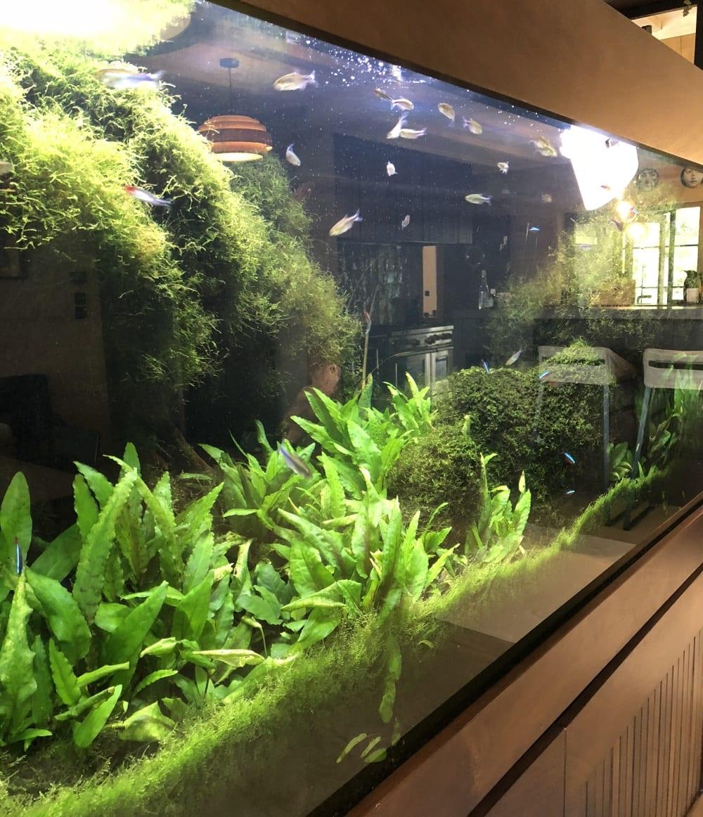 Services - Aquarium Maintenance